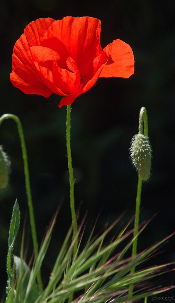 Blog de x-little-cactus-x3 - x-little-cactus-x3
